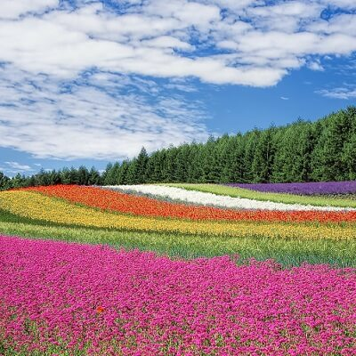 flower-field-250016_1920-400×400-compr